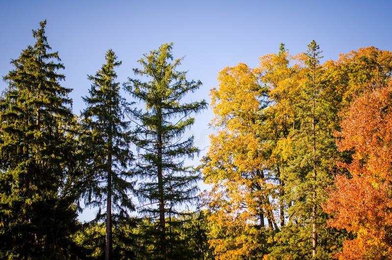 Spadku ulistnienie z kolorem żółtym, zielenią i pomarańcze, barwi przeciw błękitnemu jesieni niebu zdjęcie stock