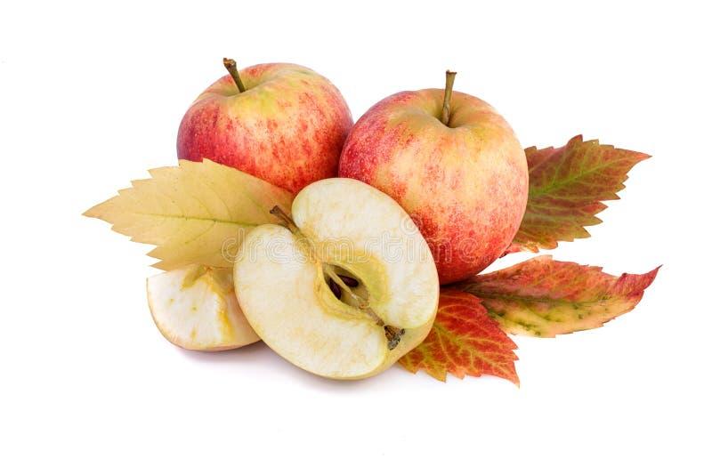 Spadku wciąż życie z czerwonymi jabłkami i kolorowym liściem zdjęcie stock