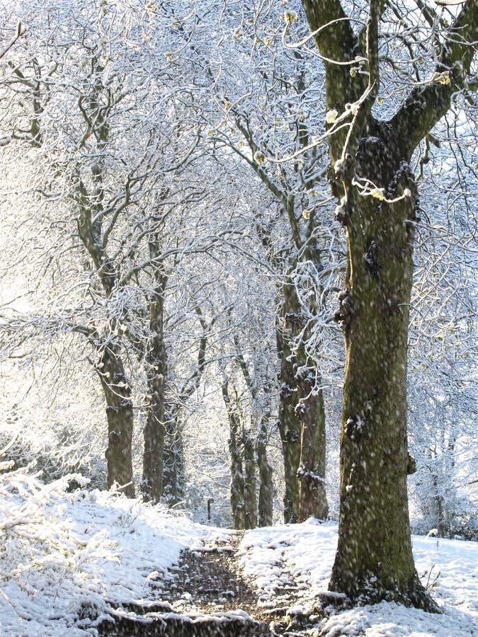 spadnie śnieg fotografia royalty free