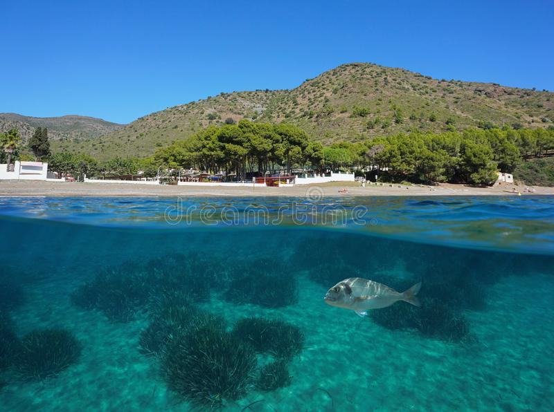 Spain beach shore fish and seagrass Mediterranean stock images
