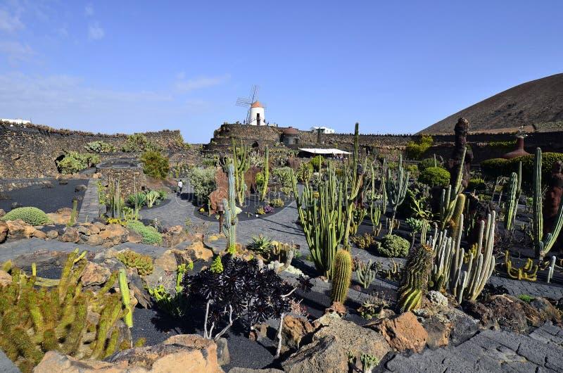 Spain, Canary Island. Spain, windmill over Jardin de Cactus in Lanzarote stock photos