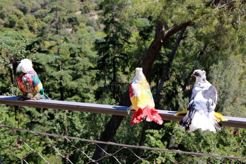spain catalonia Barcelona Pombos coloridos bonitos no parque imagens de stock royalty free