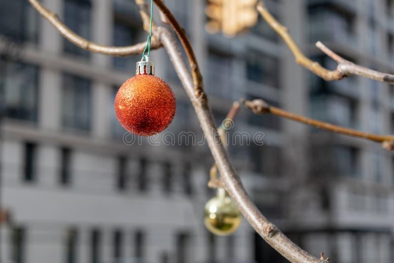 Spakrling czerwień, raczej smutny przyglądający choinka ornament, wiesza od gałąź bezlistny drzewo w środek miasta obrazy royalty free