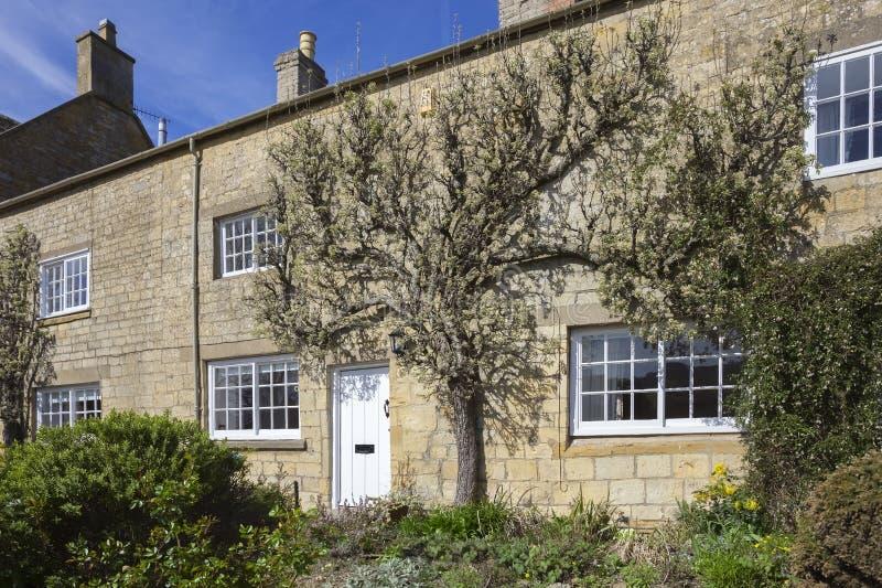 Spalierbirnenbaum, der auf Cotswold-Haus, Blockley wächst lizenzfreie stockfotos