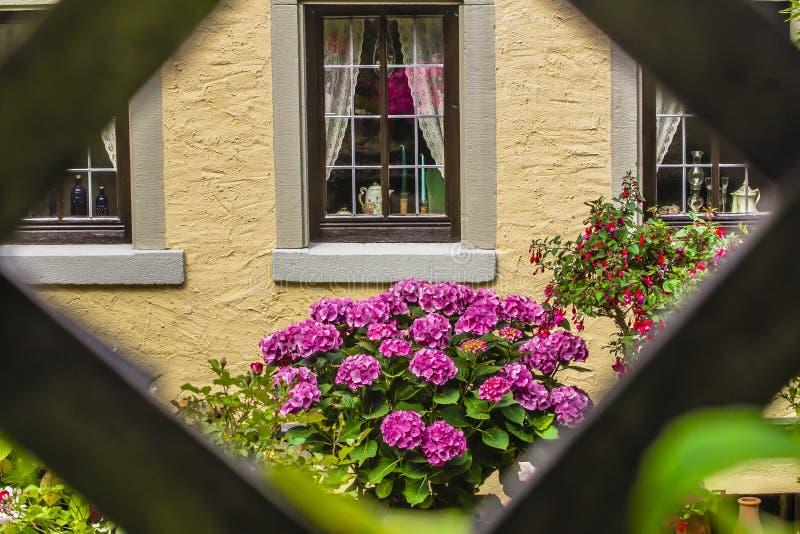 Spaljéfönster och blommor arkivbild