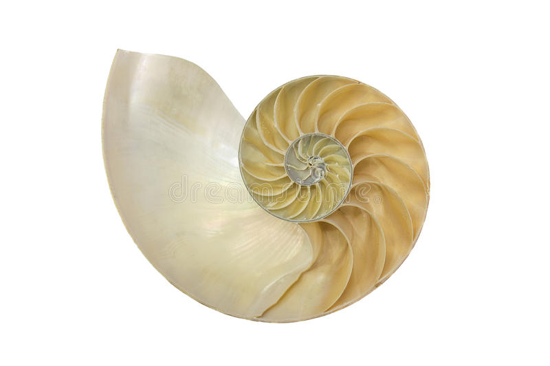 Spalten Sie sich in Hälfte der Nautilusmuschel auf lizenzfreie stockbilder