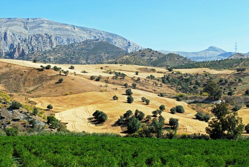 Farmland in the mountains, Alora, Spain. royalty free stock image