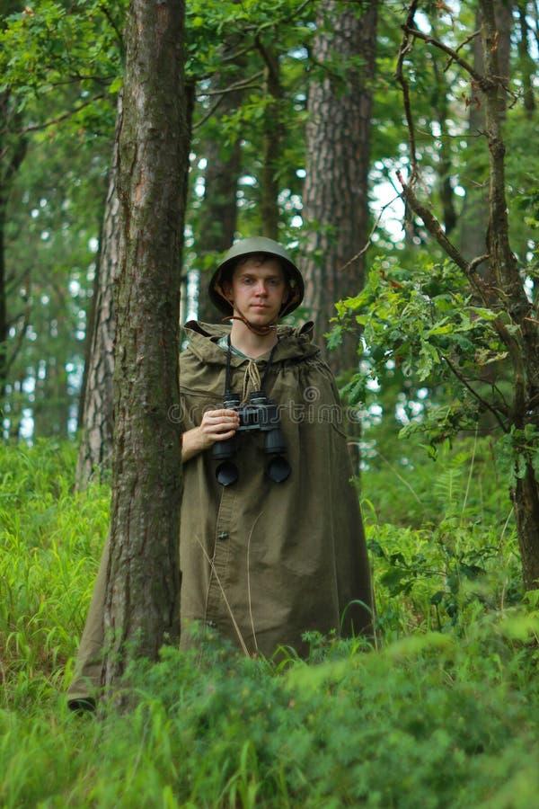 Spana i skog fotografering för bildbyråer