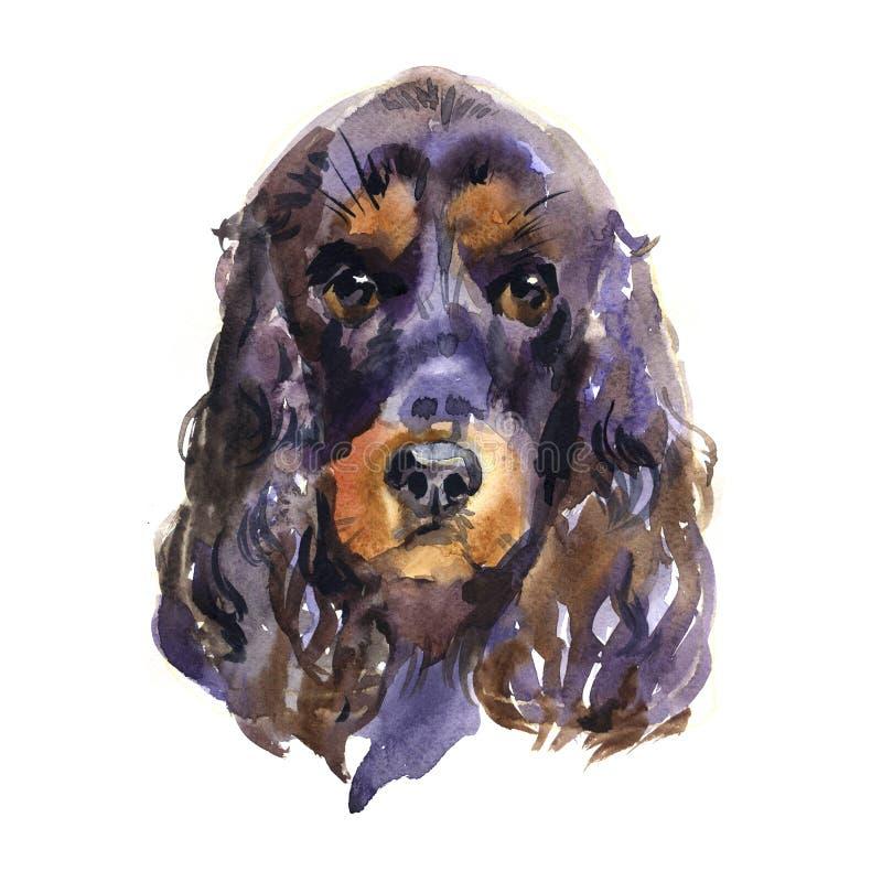 Spaniel de cocker inglês Animal, cão Ilustração da aquarela isolada no fundo branco ilustração royalty free
