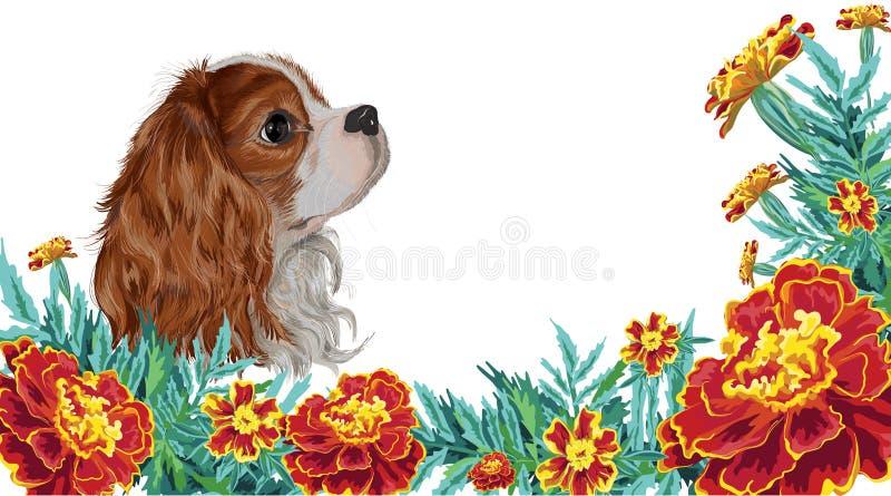 Spaniel dog realistic marigold stock illustration