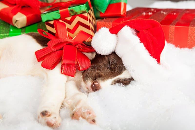 Spaniel för engelsk Springer som sover under julgranen arkivbild