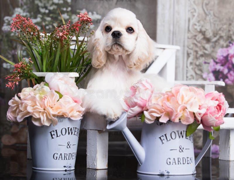 Spanielwelpe unter den Blumen auf der Bank im Garten stockfotos