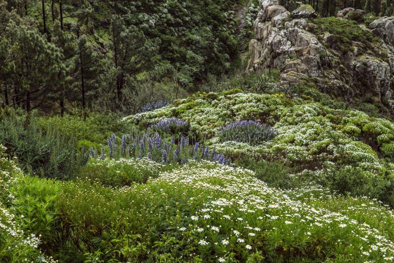 Spanien, La Gomera, ein gehendes Paradies und UNESCO-Biosphären-Reserve stockbilder