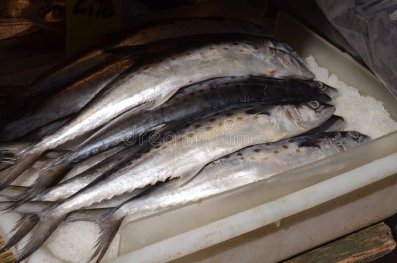 Spanische Makrele lizenzfreie stockfotos