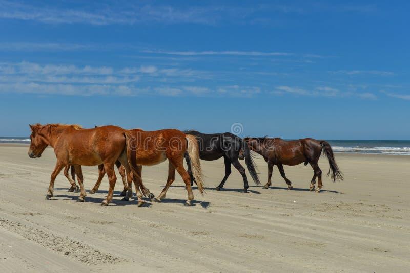 Spanische Mustangs stockbilder