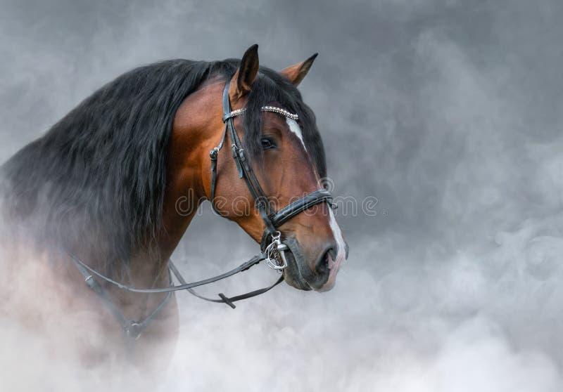 Spanisches Buschpferd mit langem Mist in leichtem Rauch stockfotos