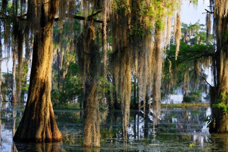 Spanisches Moos im Bayou stockfoto