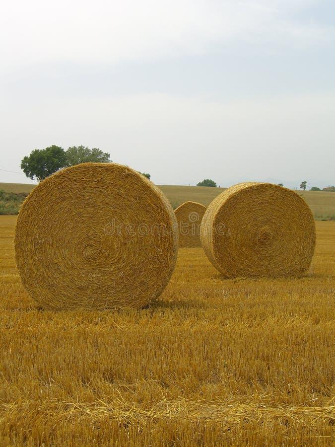 Spanish hay stock photo