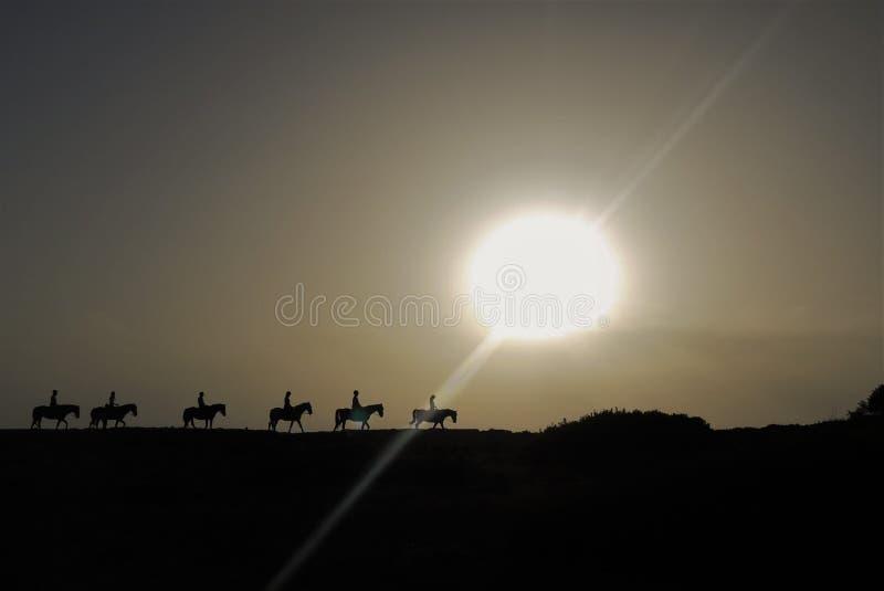 Spanish Horses at sunset stock images
