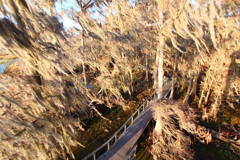 Spanish Moss in Florida stock photos