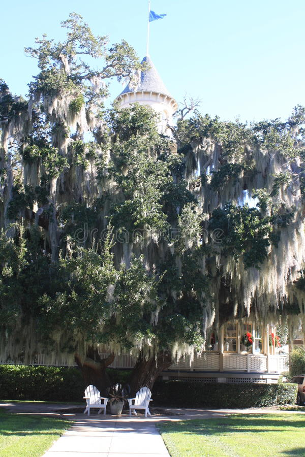 Spanish moss hanging from tree. royalty free stock photography