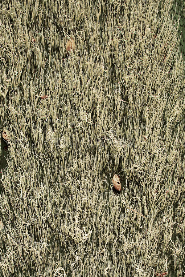 Download Spanish Moss On An Old Wall Royalty Free Stock Images - Image: 5140319