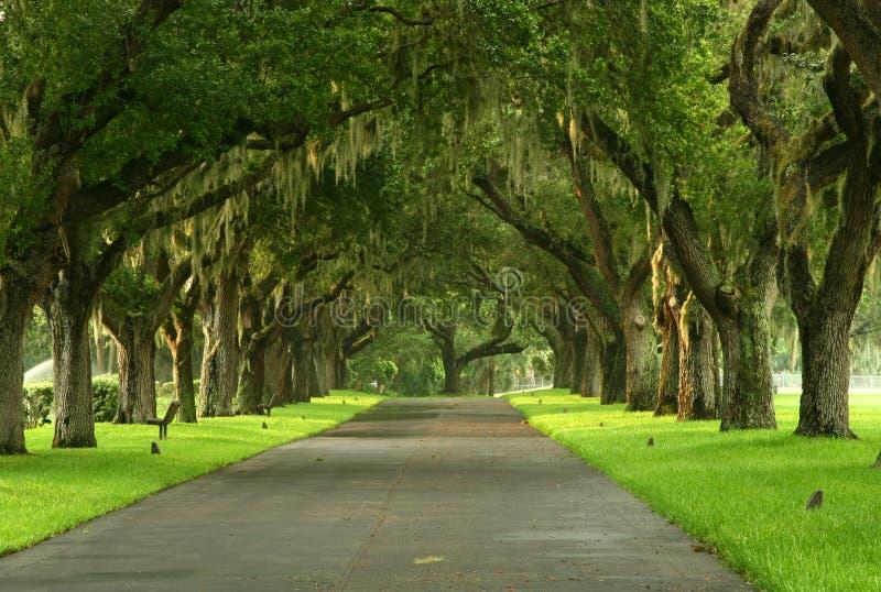 Spanish Moss pathway stock photo