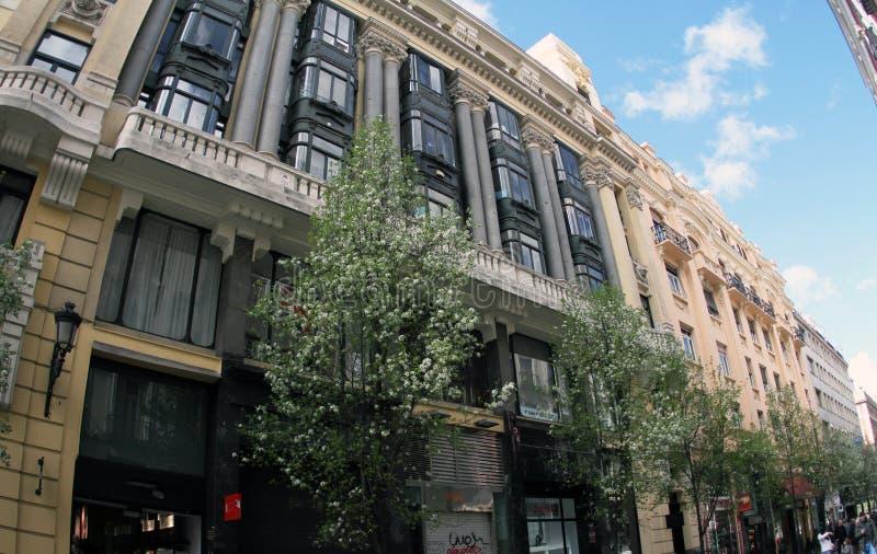 Spanje Madrid, Bomen in het stadscentrum van Madrid stock afbeeldingen