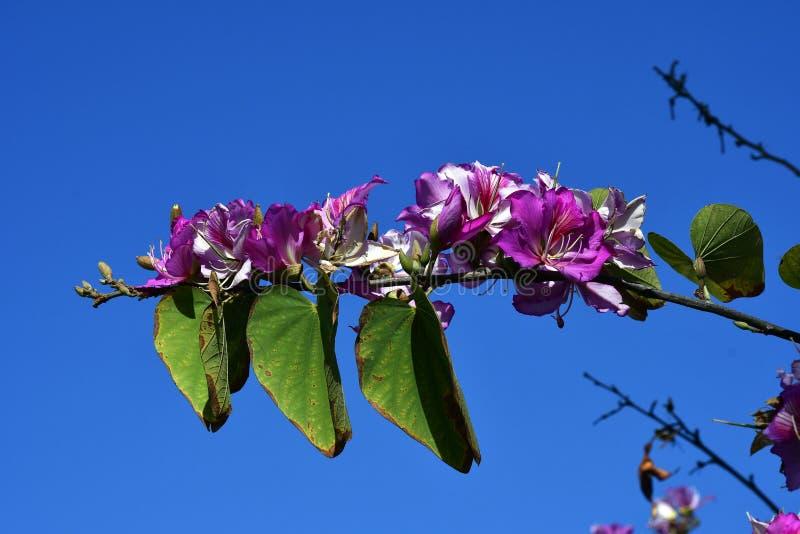 Spanje, Tenerife, Plantkunde royalty-vrije stock afbeeldingen