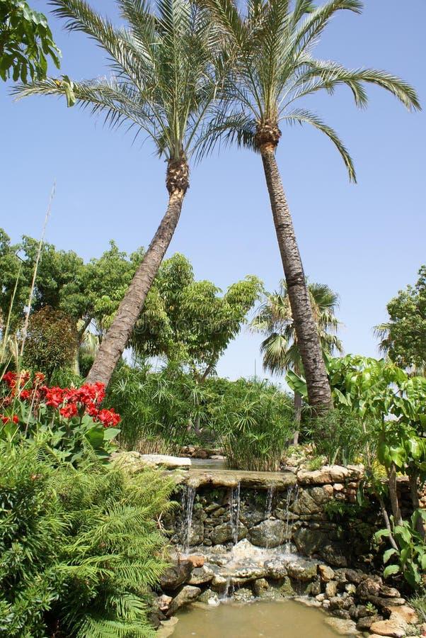 Spanjoren arbeta i trädgården med en vattenfall, palmträd & blommor royaltyfria foton