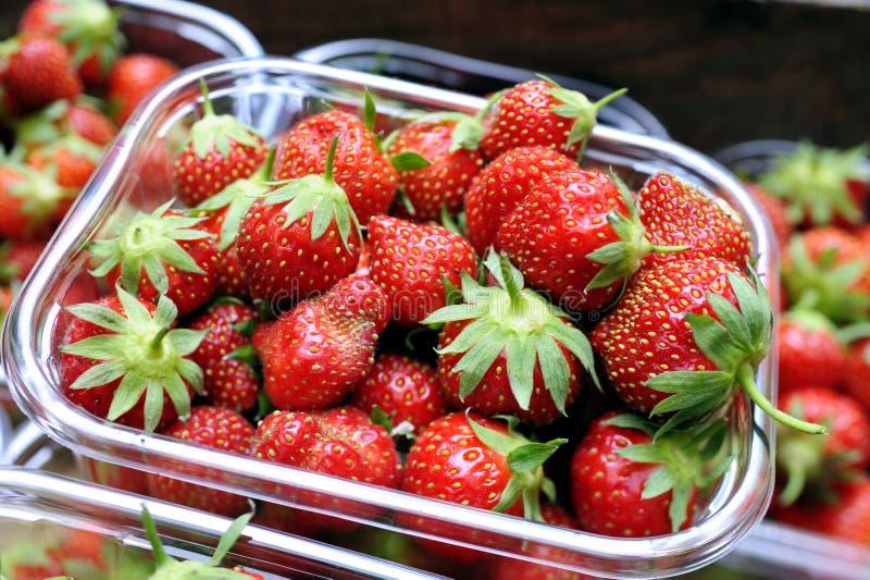 Spannkorb organische Erdbeeren stockfotografie