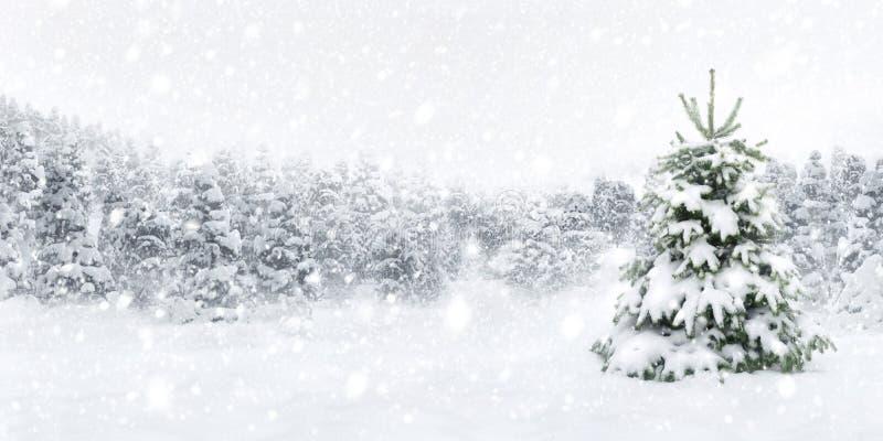Spar in dikke sneeuw royalty-vrije stock afbeeldingen