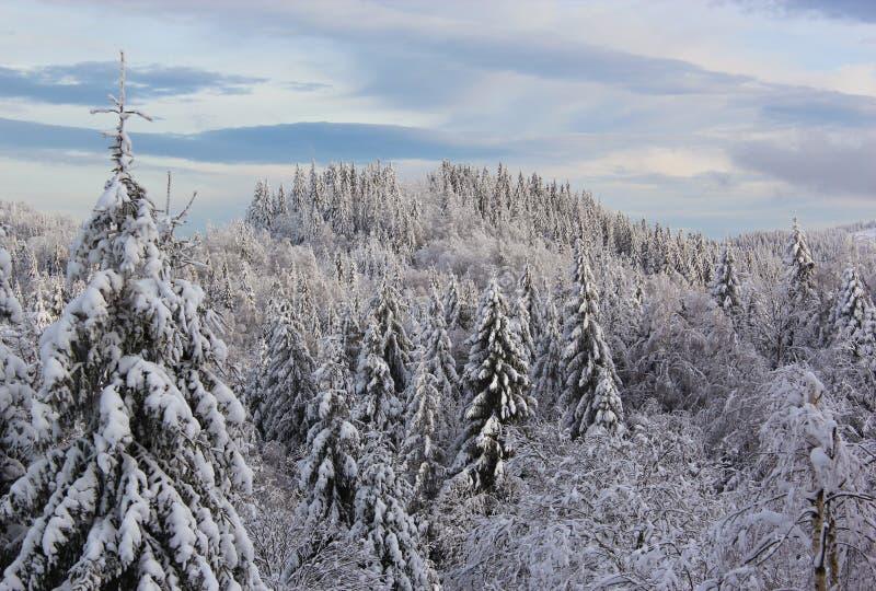 Spar en pijnboombomen onder de sneeuw worden behandeld die Fantastisch de winterland stock afbeeldingen