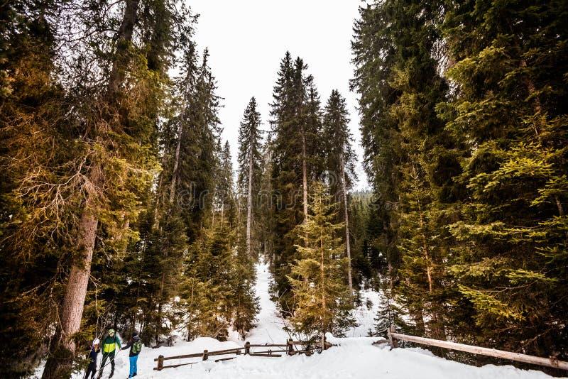 Spar houten bos en de winterlandschap met sneeuw stock fotografie