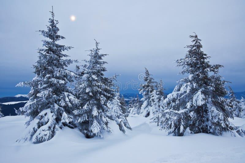 Spar, sneeuw royalty-vrije stock afbeeldingen