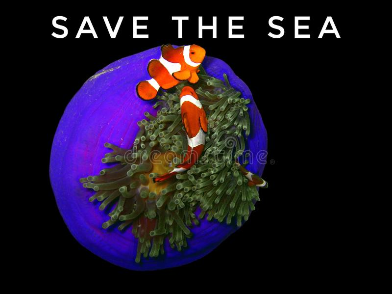 spara havet royaltyfria bilder