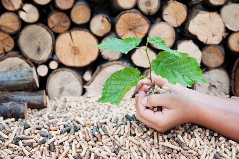 Spara träden royaltyfria bilder