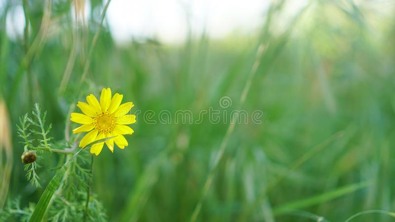 Sparad blomma i royaltyfri foto