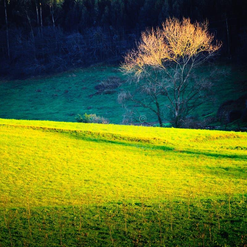 sparad tree arkivfoton