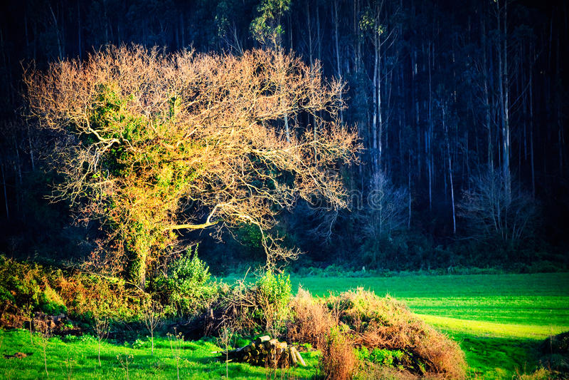 sparad tree royaltyfri foto