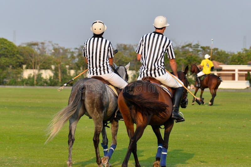 Sparade polodomare i hästpolon arkivfoton