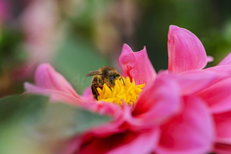 Sparato di un insetto su un fiore fotografia stock libera da diritti