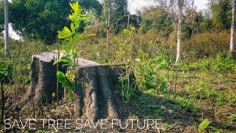 Sparen boom bewaar toekomst royalty-vrije stock afbeelding