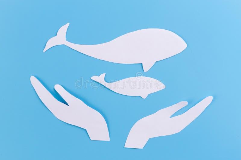 sparen het beeld van het walvissenconcept stock foto's
