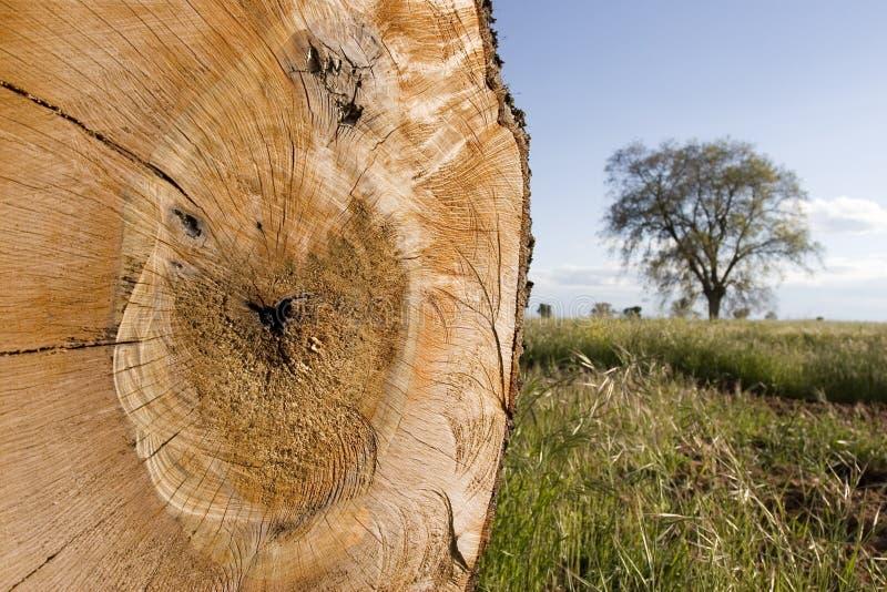 Sparen het bos stock afbeelding