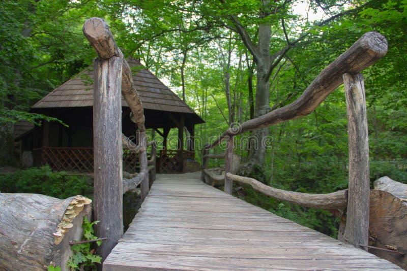 Sparen het milieu, het mooie groene park en het bos met waterval en kleine zuivere drinkbare waterkreek royalty-vrije stock afbeelding
