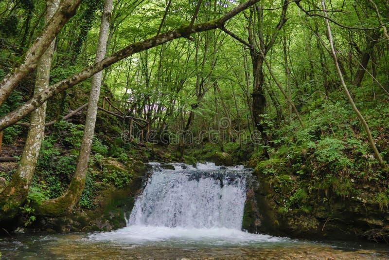 Sparen het milieu, het mooie groene park en het bos met waterval en kleine zuivere drinkbare waterkreek royalty-vrije stock foto's