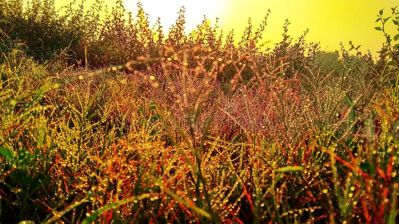 grasses and rising sun royalty free stock photos