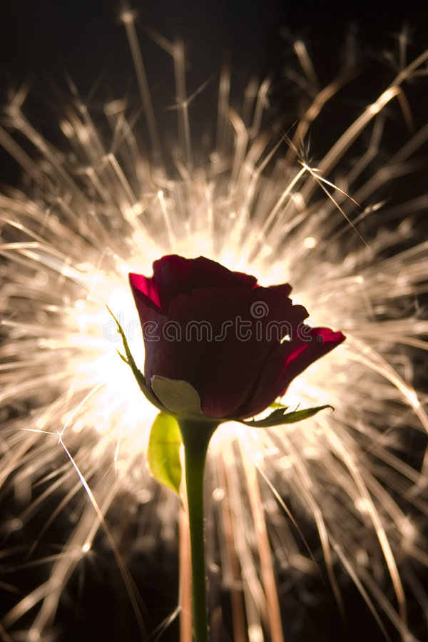 Download Sparkle rose stock image. Image of romantic, petals, leaf - 494343