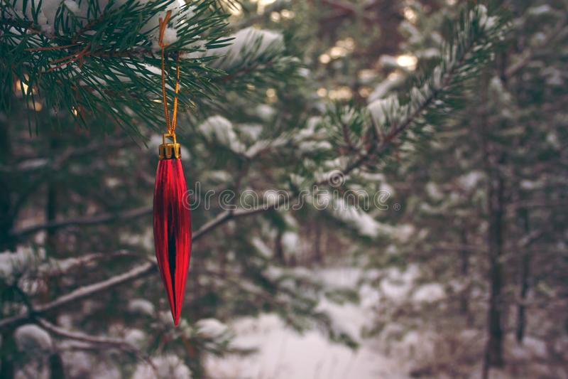 Sparkling red christmas tree toy on a pine branch in a winter snowy forest. Background with empty copy space for inscription Idea of merry and happy new year stock images